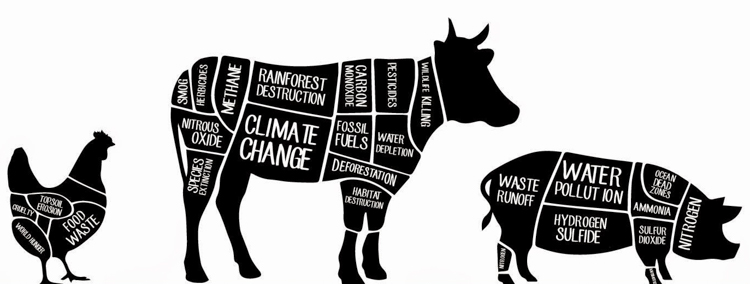 The Problem: Animal Agriculture and the Environment